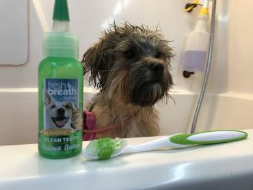Oral Care For Your Companion
